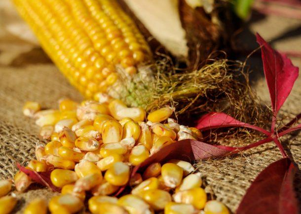corn-kernel-209389